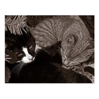 De Katten van Yang van Yin Briefkaart