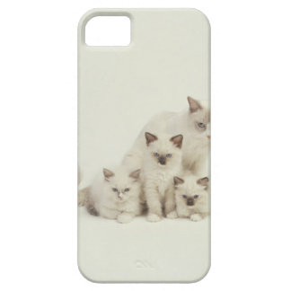 De kattenvrouw van Ragdoll met katjes Barely There iPhone 5 Hoesje
