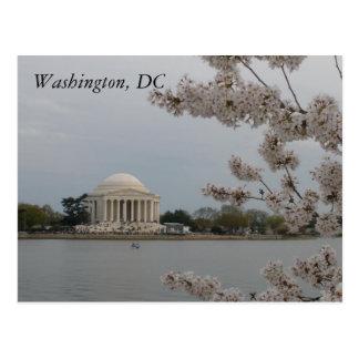 De kers komt tot bloei: Washington, het Briefkaart