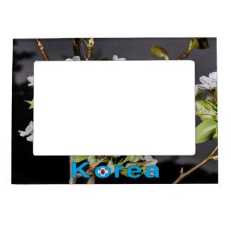 De Kers van Korea komt Wit tot bloei Magnetisch Lijstje