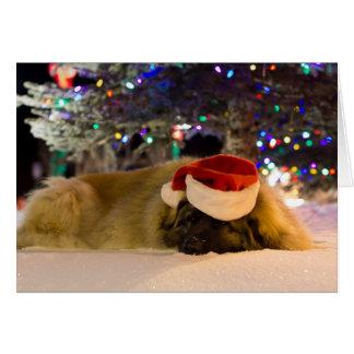 De Kerstkaart van Leonberger van de slaap Briefkaarten 0