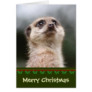 De Kerstkaart van Meerkat Kaart