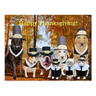 De klantgerichte Grappige Post van de Thanksgiving Briefkaart