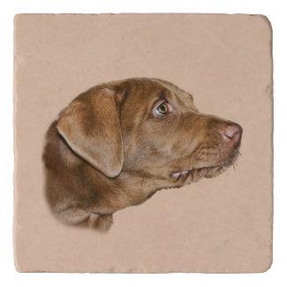 De Klantgerichte Hond van de labrador, Trivet