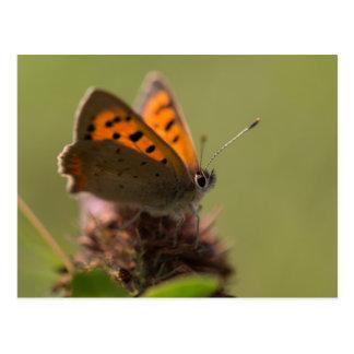 De kleine Vlinder van het Koper Briefkaart