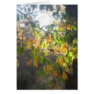 De Kleur van de herfst Briefkaarten 0