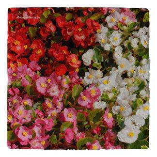 De kleurrijke Begonia's van de Was Trivet