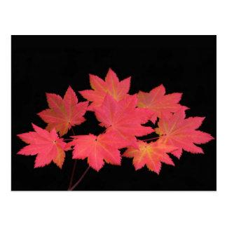 De kleurrijke Bladeren… Briefkaart