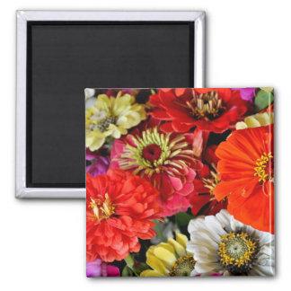 De kleurrijke dahlia bloeit magneet