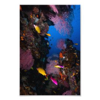 De kleurrijke Druk van de Foto van het Zee van het