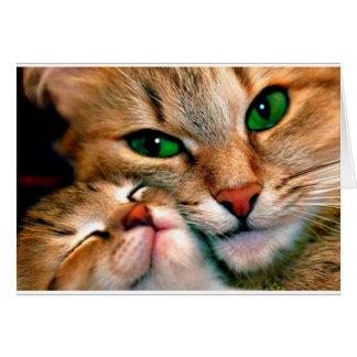 De knuffels van de kat briefkaarten 0