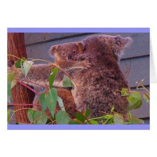 De knuffels van de koala kaart