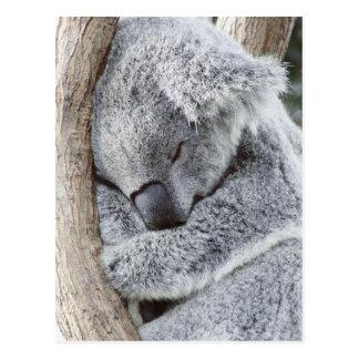 De koalababy van de slaap briefkaart