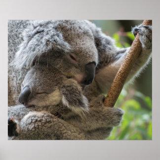 De koala's van de moeder en van babyjoey in slaap poster