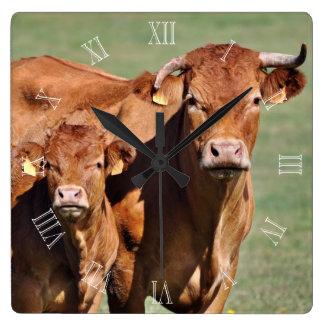 De koe en het kalfsklok van Limousin met aantallen Vierkante Klok