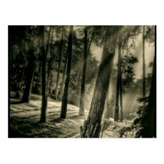 De koele Zwart-witte BosGiften van de Natuur van Briefkaart