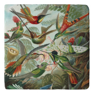 De Kolibries van Ernst Haeckel - de Vormen van de Trivet