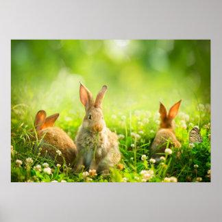 De Konijnen van Pasen Poster
