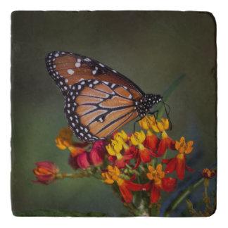 De koningin op tropisch milkweed trivet