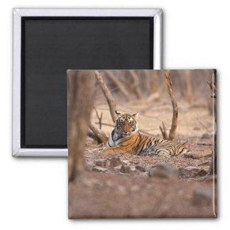 De koninklijke Tijger van Bengalen, Nationaal Park Vierkante Magneet