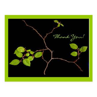 De Koreaanse bonsai van de Haagbeuk dankt u Briefkaart