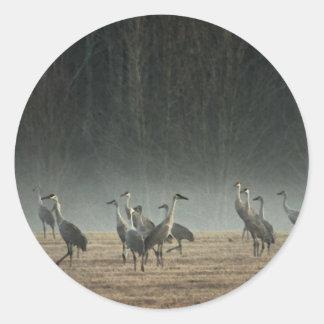 De Kranen van Sandhill in de Vroege Mist van de Ronde Sticker