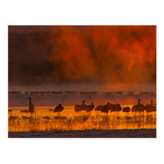 De kranen van Sandhill in zonsopgangmist 2 Briefkaart
