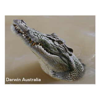 De Krokodil Darwin Australië van het zoute water Briefkaart