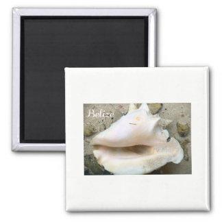 De Kroonslak Shell van Belize Vierkante Magneet