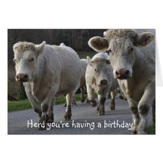 De kudde u heeft een verjaardag! briefkaarten 0
