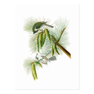 De kuif Vogels Amerika van John James Audubon van Briefkaart