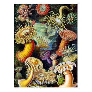 de kunst van Natuur door Ernst Haeckel