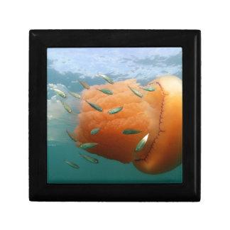 De Kwal van het vat zwemt met Makreel Decoratiedoosje