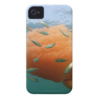 De Kwal van het vat zwemt met Makreel iPhone 4 Hoesje