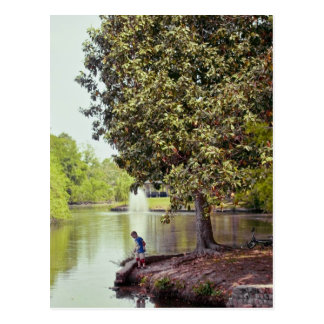 De Lagune van Audubon Briefkaart