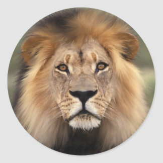 De leeuw ronde sticker