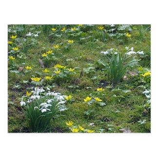 De lente bloeit Briefkaart
