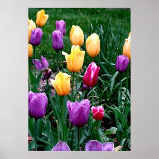 De lente bloeit de Roze Gele Paarse Tuin van Poster