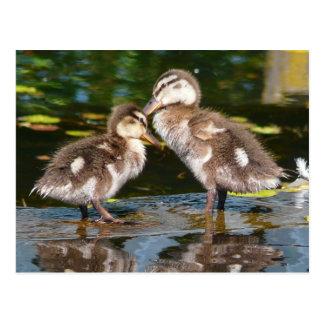 De lente Duckies Briefkaart