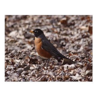 De lente Robin Briefkaart