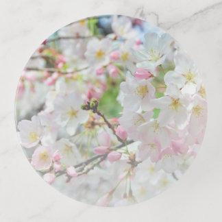 De Lente van de Bloesem van de kers Sierschaaltjes