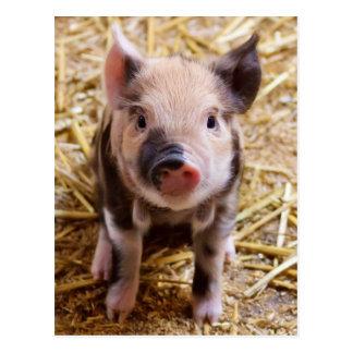 De leuke Babys van het Boerenerf van de Dieren van Briefkaart