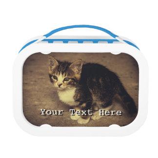 De leuke Foto van het Katje, het Dier van het Baby Lunchbox