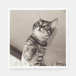 De leuke Foto van het Katje van Bengalen Wegwerp Servet