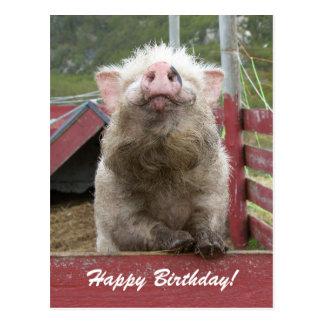 De leuke Groet van de Verjaardag van het Varken Briefkaart