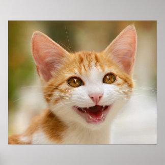 De leuke het glimlachen miauw van de katjes poster