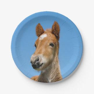 De leuke Ijslandse Foto van het Pony van het Papieren Bordje
