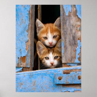 De leuke Katjes van de Kat in een Blauwe Vintage Poster