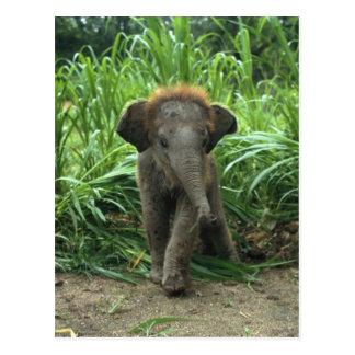 De leuke Olifant van het Baby Briefkaart