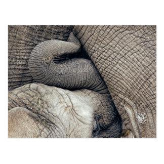 De leuke Olifant van het Baby van de Verzorging Briefkaart